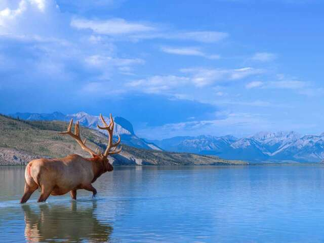 Panoramic Canadian Rockies with Alaska Cruise Oceanview Cabin Summer 2018