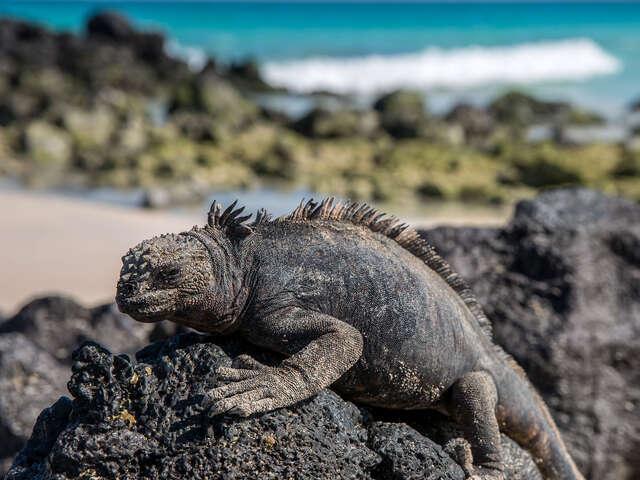Galápagos — West Islands aboard the Archipell I/II