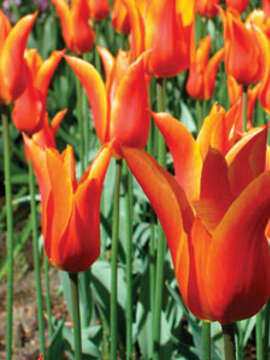 Tulip Time Cruise for Beer Enthusiasts