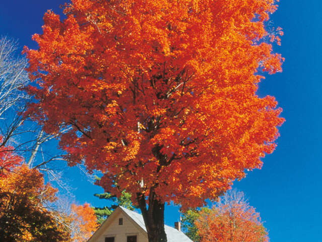 New England's Fall Foliage (Summer 2018)