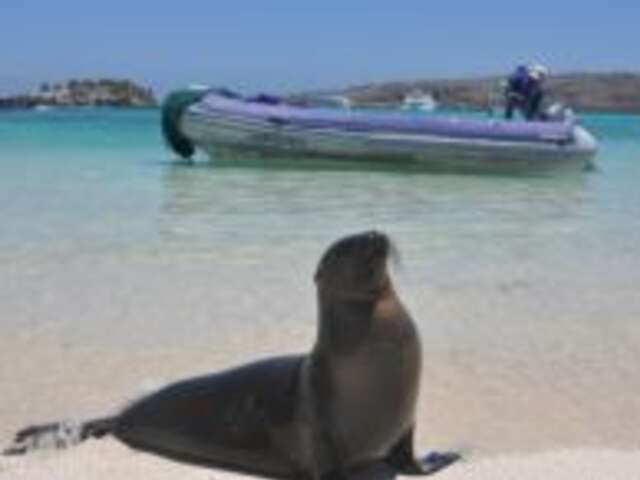Galapagos Island Hopper (Start Guayaquil, end Guayaquil)