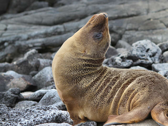 Galápagos — South & East Islands aboard the Monserrat