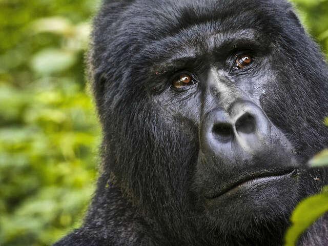 Kenya & Uganda Gorilla Adventure