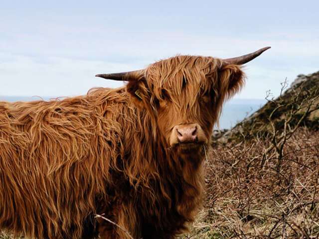 Country Roads of Scotland (Preview 2019)