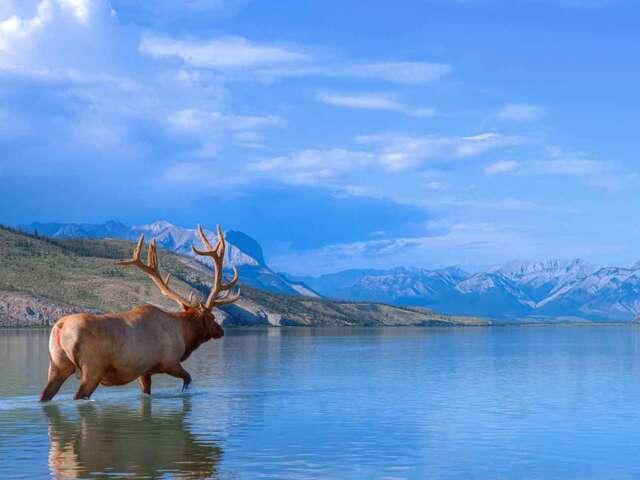 Panoramic Canadian Rockies Summer 2019
