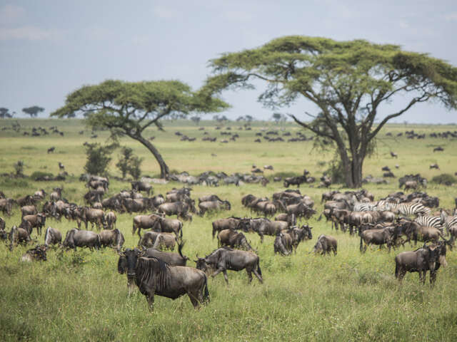 Serengeti Migration Safari