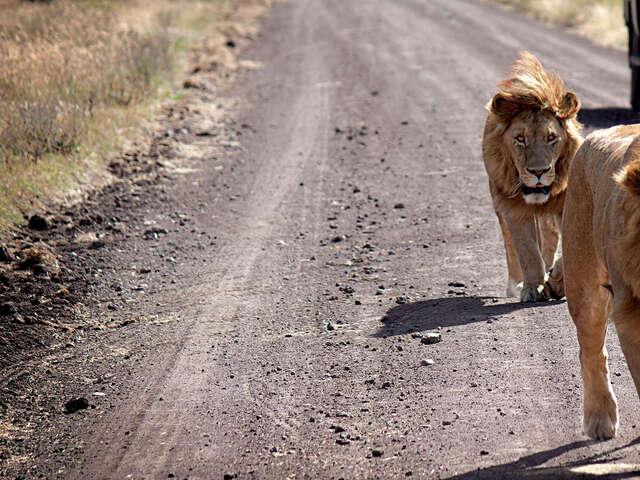 Serengeti Safari to Zanzibar