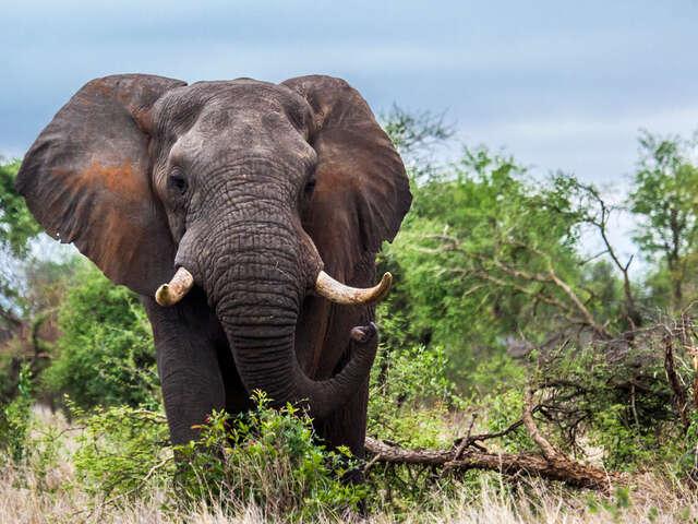 Discover Kruger & Namibia