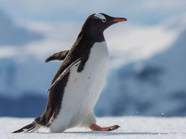 Falklands, South Georgia & Antarctica