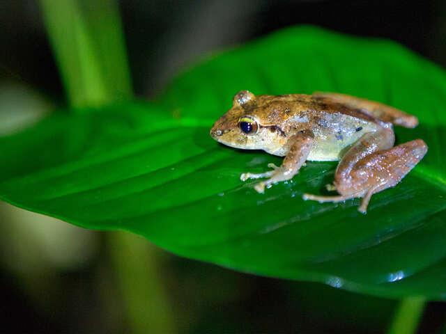 TailorMade Costa Rica: Natural Wonders