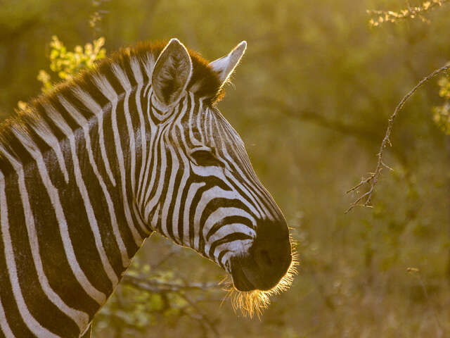 TailorMade Southern Africa: Safari & Camping Adventure