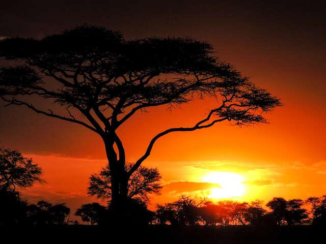 Nairobi to Zanzibar: Serengeti & Sunsets