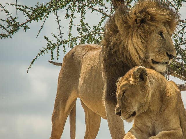 Wildlife Parks of Tanzania