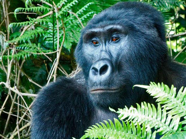 Masai Mara & Gorilla Adventure
