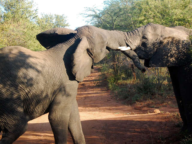 South Africa Overland: Sea Cliffs & Safari Drives